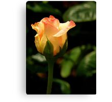 The Rose ~ Part One Canvas Print