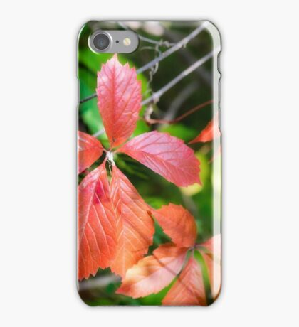 Red Virginia Creeper and Maple Leaves iPhone Case/Skin