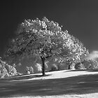 Infrared Tree by WStudios