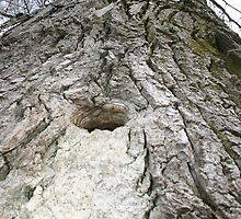 A Hole in the Old Oak Tree by Alyce Taylor