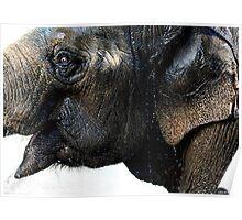 Exuberant Elephant Poster