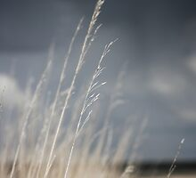 Prairie grass in front of a storm by rbailsjeffrey