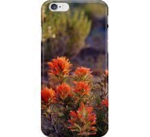 Palomino Valley Indian Paintbrush iPhone Case/Skin