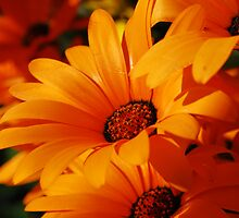 Sunny Side Up by rabeeker