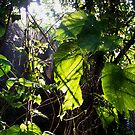 Forest Web by theblackazar