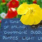 Champagne Bubbles Poppy by rabeeker