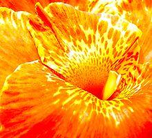 Colour Eruption by Tamara Travers