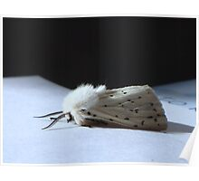 White Ermine Moth Poster