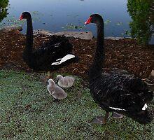 Family Ashore by stevealder