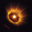 Light  by Hans Bax