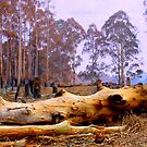 After the Fires by Maureen Clark