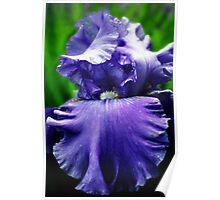 Call Me Iris Poster