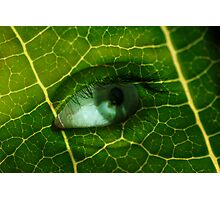 Natures Alive Photographic Print
