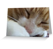 Kipper Kips Greeting Card