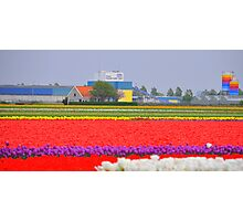 United Colours of Bloom Photographic Print
