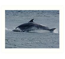 Dolphin Roll Art Print