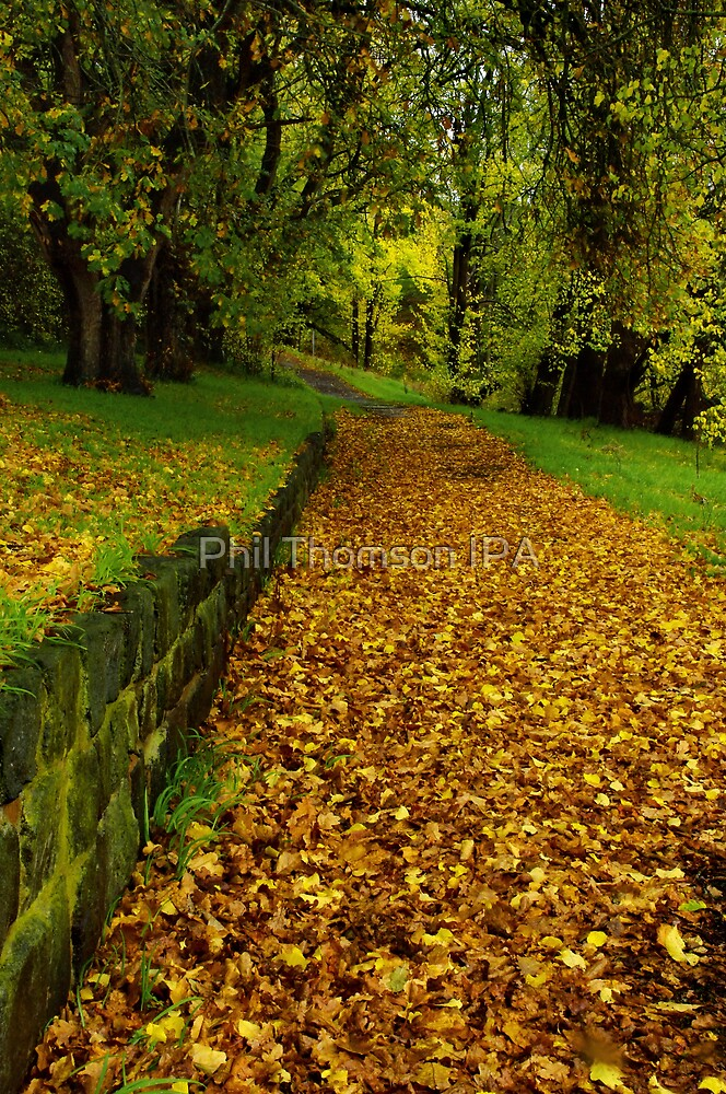"""Autumn Path"" by Phil Thomson IPA"