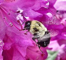 Bumble Bee in flight by Sheri Nye