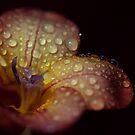 Freesia in the Rain by RA-Photography