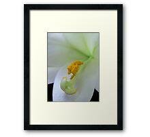 White Lily Detail Framed Print