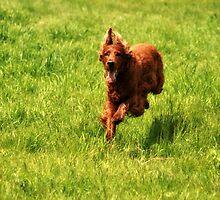 Dog Run by terrebo