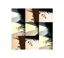 Shades  by Isa Rodriguez