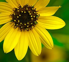 Yellow Flower by Mukesh Srivastava