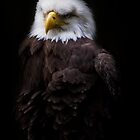 American Eagle by Sharon Morris
