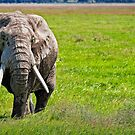 Old, Muddy Elephant by Scott Ward