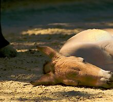 Sleeping horse by Louise Fahy