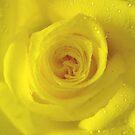 *YELLOW ROSE* by Van Coleman
