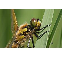 Hairy Bug Photographic Print