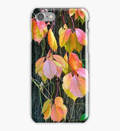 Virginia Creeper in Autumn iPhone Case/Skin