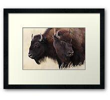 Bison Friendship Framed Print