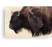 Bison Friendship Canvas Print