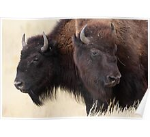 Bison Friendship Poster