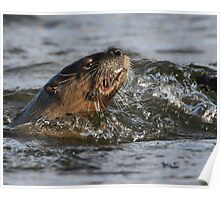 River Otter with Fish Poster