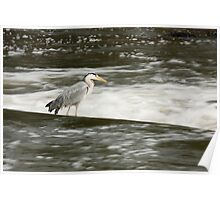 Grey Heron on the Weir Poster