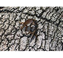 Anole's in Battle Photographic Print