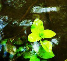 Through the Water by Ashley Espolt