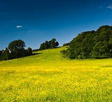 Buttercup field by oskanoears