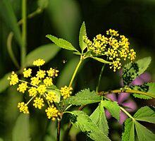 Wild Flower Yellow by Rick  Friedle