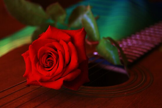 Serenade by Barbara  Brown