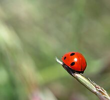 Lady Bug Squared by Miriam Gordon