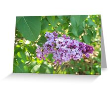 Lovely Lilac Greeting Card