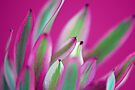 Leucadendron Abstract by Renee Hubbard Fine Art Photography