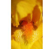 Inside Iris Photographic Print
