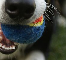 ball...ball...ball....ball... by Shawnna Taylor