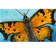 Grey Comma Butterfly Photographic Print