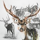 Axis Deer by BarbBarcikKeith